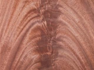 palma de caoba